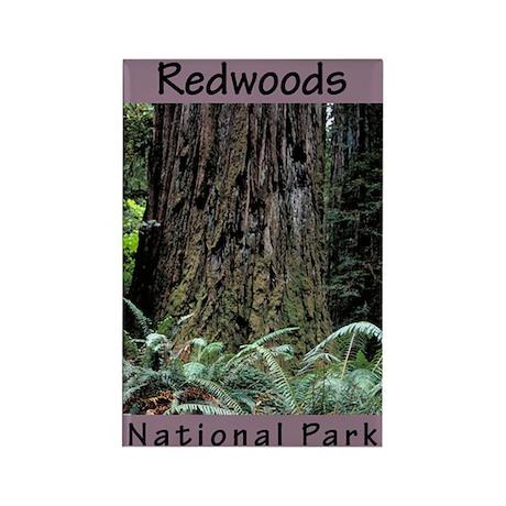 Redwoods National Park (Vertical) Rectangle Magnet