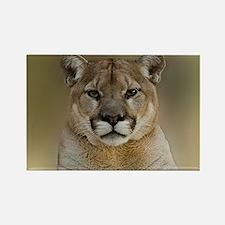 Puma Magnets