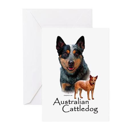 Australian Cattle Dog Greeting Cards (Pk of 20)