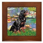 Lilies2/Rottweiler Framed Tile