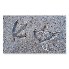 Bird Tracks on the Beach Rectangle Decal