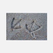 Bird Tracks on the Beach Rectangle Magnet