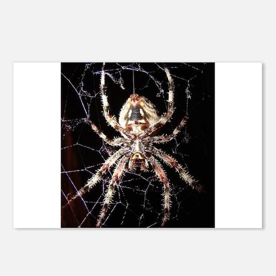 Araneus Spider Postcards (Package of 8)