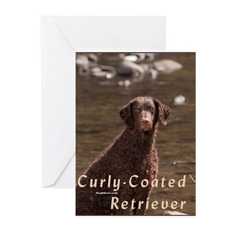 Curly Coated Retriever-4 Greeting Cards (Pk of 10)