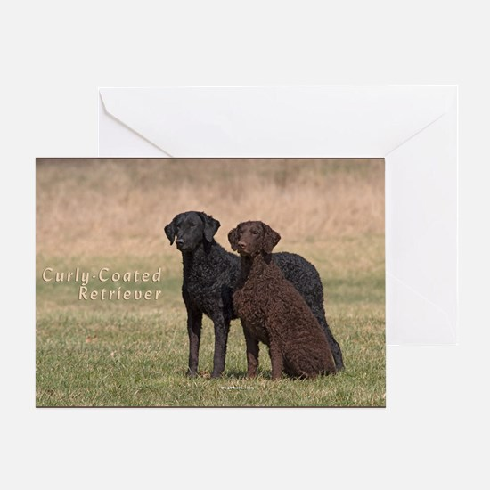 Curly Coated Retriever-5 Greeting Card