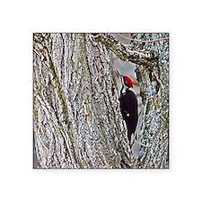 "Pileated Woodpecker Square Sticker 3"" x 3"""