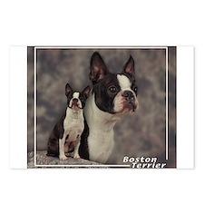 Boston Terrier-1 Postcards (Package of 8)