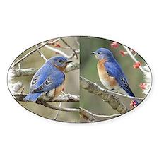 Bluebird Decal