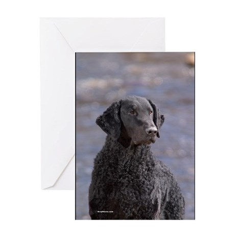 Curly Coated Retriever-1 Greeting Card