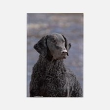 Curly Coated Retriever-1 Rectangle Magnet