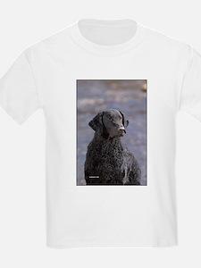 Curly Coated Retriever-1 T-Shirt