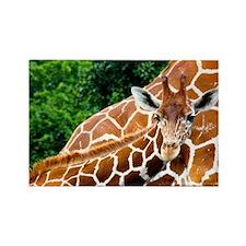 Giraffe Baby Rectangle Magnet