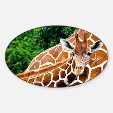Giraffe Baby Sticker (Oval)