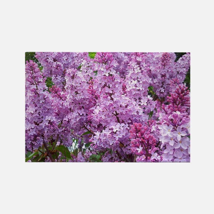 Cute Lilac Rectangle Magnet