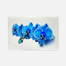 Ice blue orchids Magnets