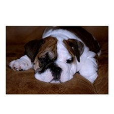 Bull Dog Puppy Postcards (Package of 8)
