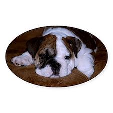 Bull Dog Puppy Decal