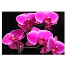 Beautiful Orchid Framed Print