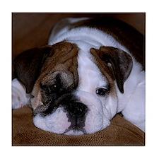 Bull Dog Puppy Tile Coaster