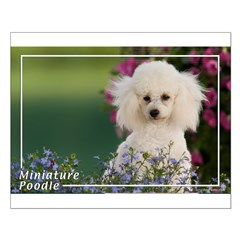 Miniature Poodle-4 Posters