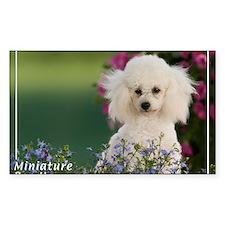 Miniature Poodle-4 Rectangle Decal