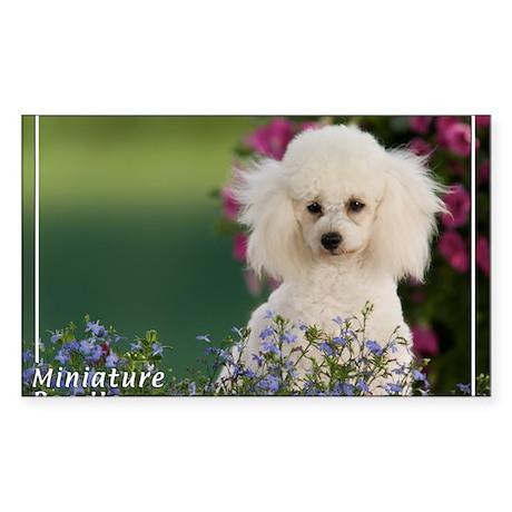 Miniature Poodle-4 Rectangle Sticker