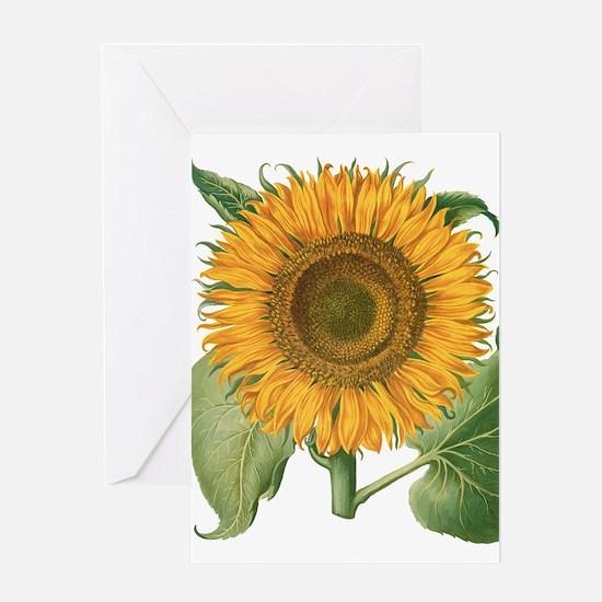 Vintage Sunflower Basilius Besler Greeting Cards