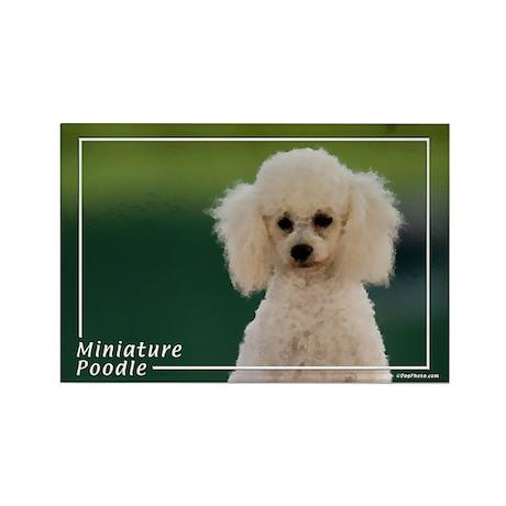 Miniature Poodle-9 Rectangle Magnet
