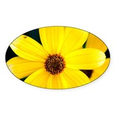 1 Yellow Daisy Oval Decal