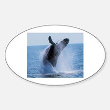 whale jumping Decal
