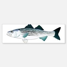 Striped Bass v2 Bumper Bumper Bumper Sticker