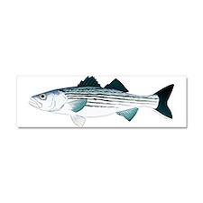 Striped Bass v2 Car Magnet 10 x 3