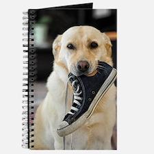 Labrador Retriever with Shoe Journal
