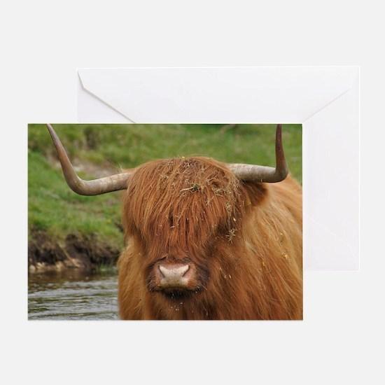 Cute Highland cattle Greeting Card