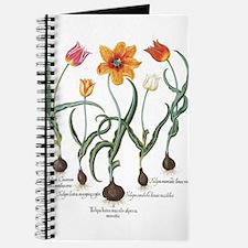 Vintage Tulips by Basilius Besler Journal