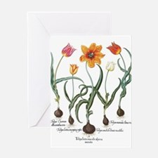 Vintage Tulips by Basilius Besler Greeting Cards