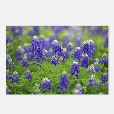 Deep Blue Bluebonnets Postcards (Package of 8)