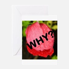 Why? Greeting Cards