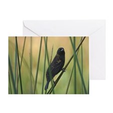 Quiet Bird Greeting Card