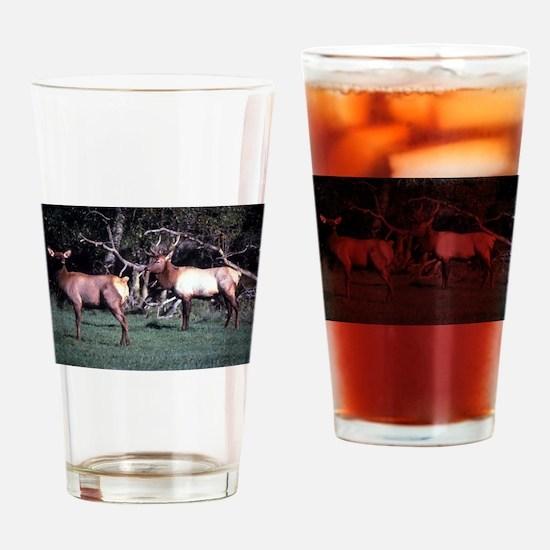 Roosevelt Elk Drinking Glass