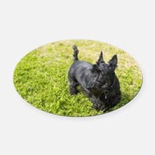Scottie Dog Oval Car Magnet