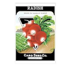 Vintage Radish Seed Packe Postcards (Package of 8)