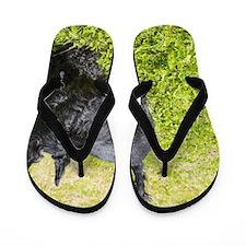 Scottie Dog Flip Flops