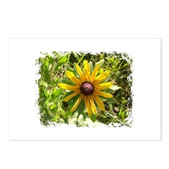 WILD DAISY FLOWER Postcards (Package of 8)