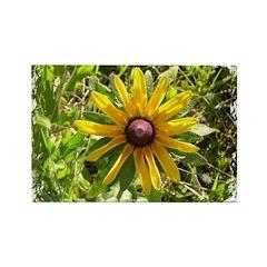 WILD DAISY FLOWER Rectangle Magnet