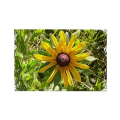 WILD DAISY FLOWER Rectangle Magnet