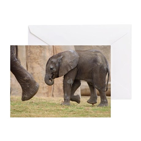 Baby Elephant Greeting Cards (Pk of 10)