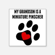 My Grandson Is A Miniature Pinscher Sticker