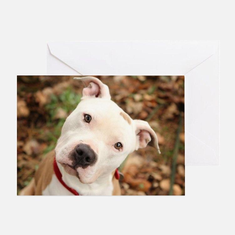 Pitbull Greeting Card