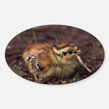 Cute Grouse Decal